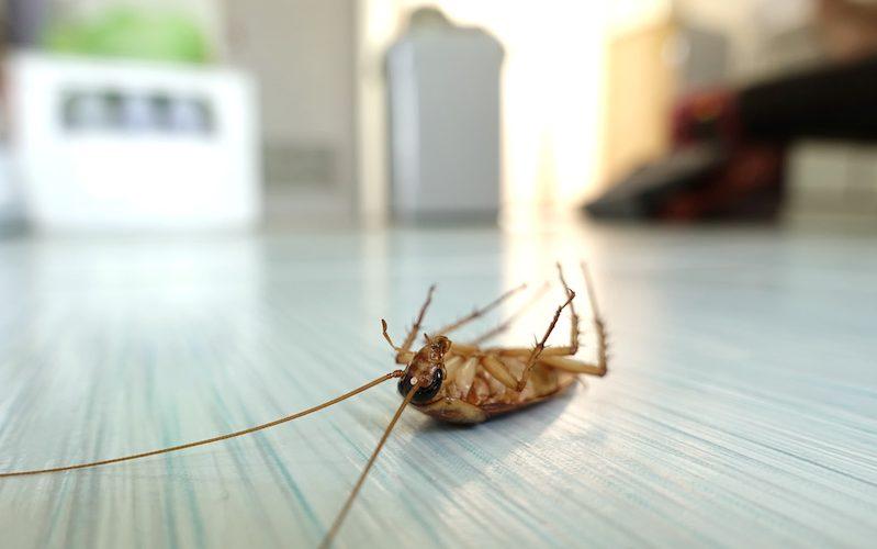 cockroaches exterminator in Panama | eliminar cucarachas en Panamá