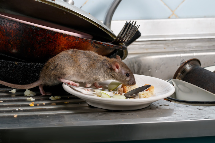 eliminar roedores en Panamá