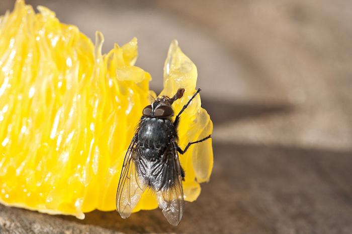 eliminar moscas en Panamá