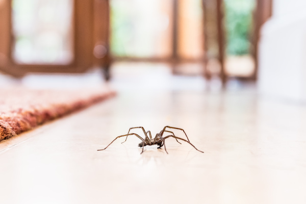 Eliminar Arañas en Panamá